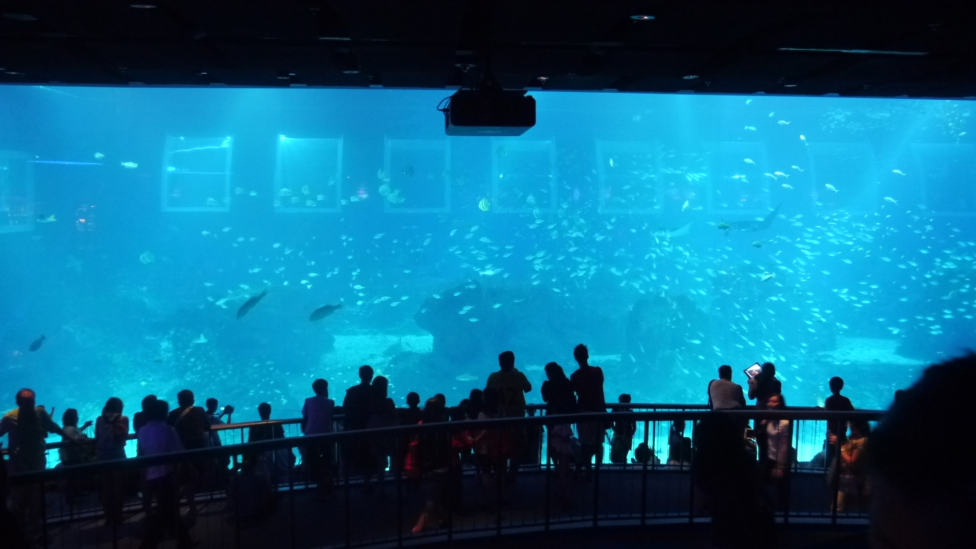 at the S.E.A. Aquarium, they claim to be the biggest in the world!